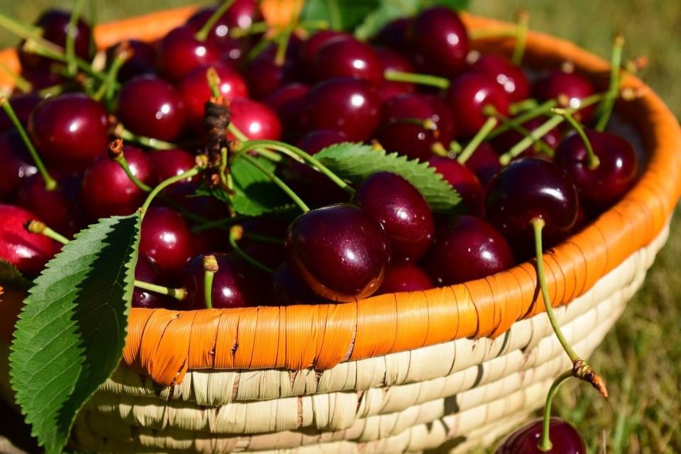 Саженцы вишни Несвижская цена 15 руб 3